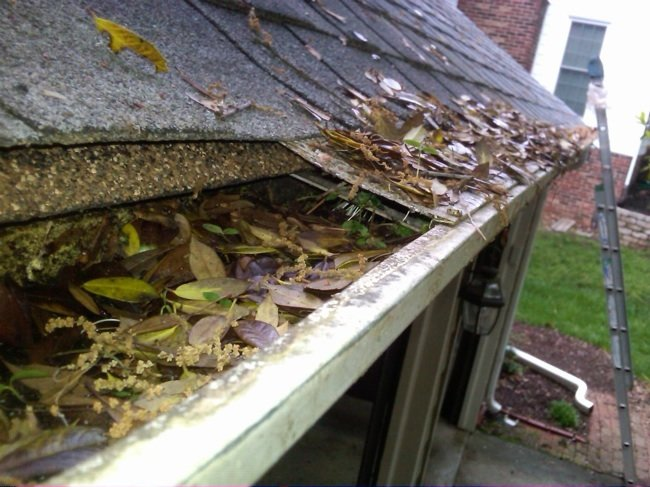Spring Cleaning Maintenance On Your Roof Cambie Roofing